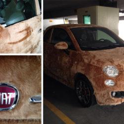 furry-fiat-500-custom-car-2