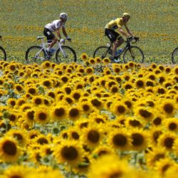 Team Sky rider Chris Froome of Britain (2ndR), race leader's yellow jersey, cycles past a sunflowers field during the 198.5-km (123.3 miles) 13th stage of the 102nd Tour de France cycling race from Muret to Rodez, France, July 17, 2015. REUTERS/Eric Gaillard