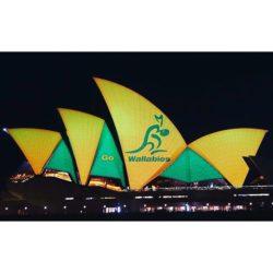 sydney opera house wallabies2
