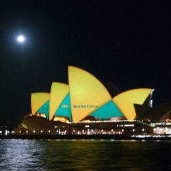 sydney opera house wallabies3