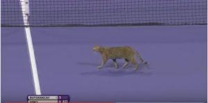gatto in campo roberta vinci